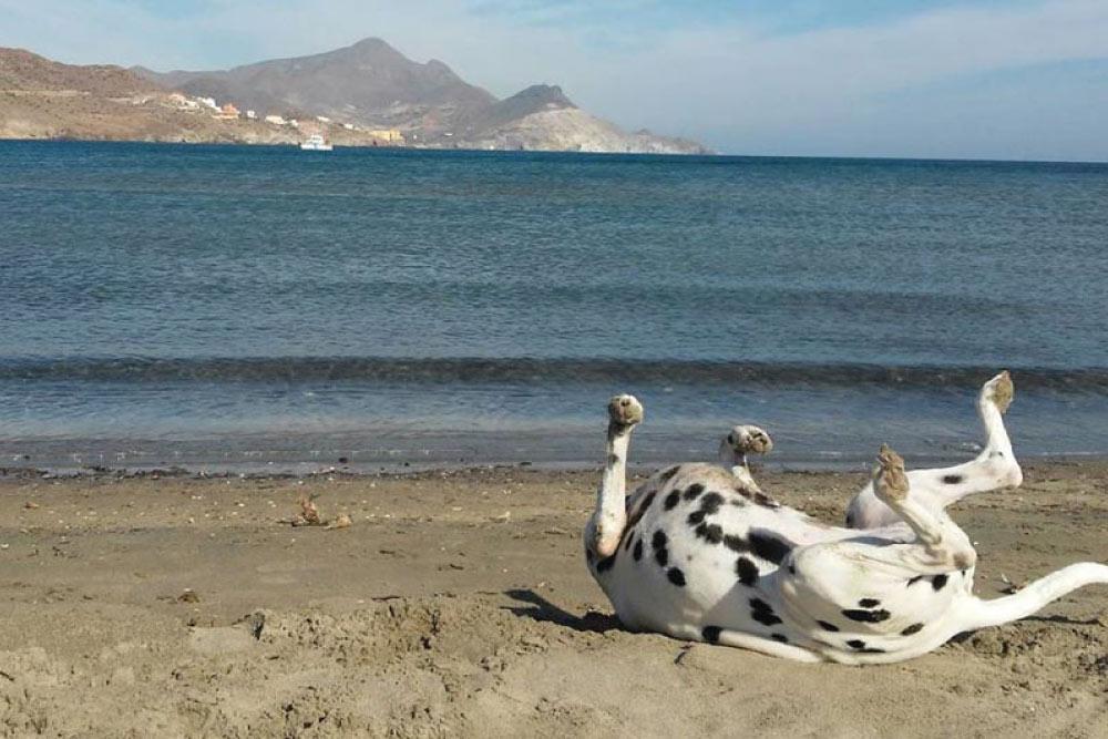 Playas y parajes   San José   Cabo de Gata